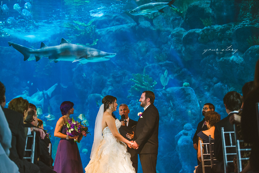 Suzanne & Mike's Florida Aquarium Wedding   Tampa Based ...