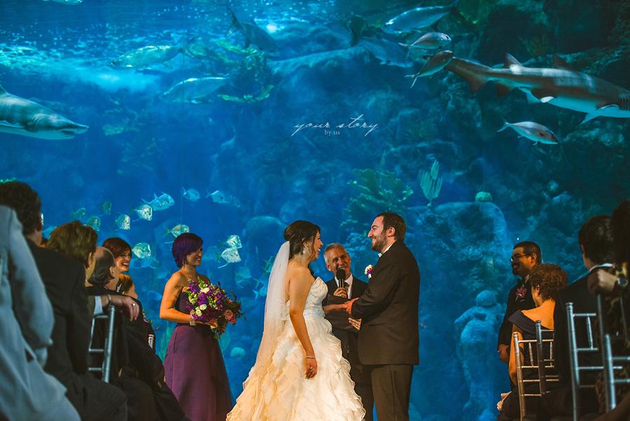 Suzanne Mike 39 S Florida Aquarium Wedding Tampa Wedding