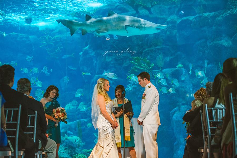 Rhea & Adam's Florida Aquarium Wedding | Tampa Based ...